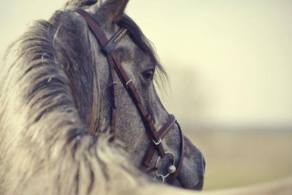 Skeptical horse