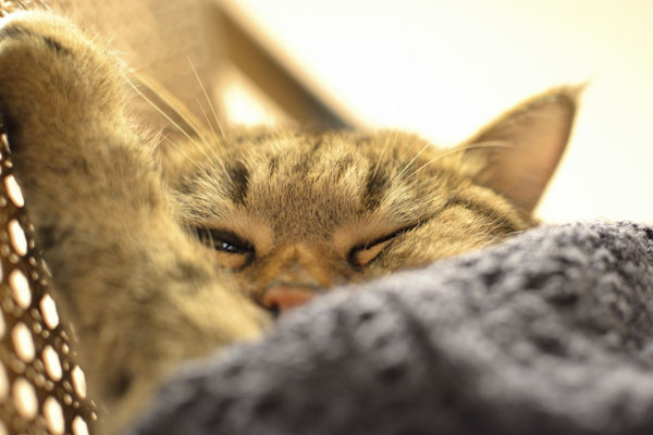 Cat snuggled under a warm blanket