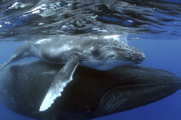 Whale and her calf