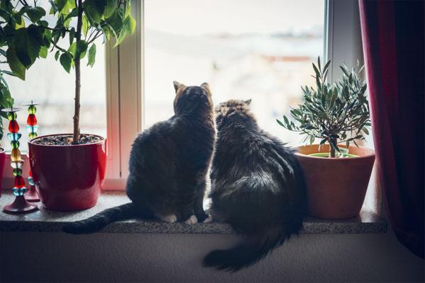 Two cats watching through window
