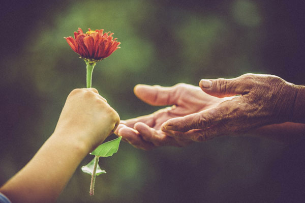 Giving flower to elderly woman