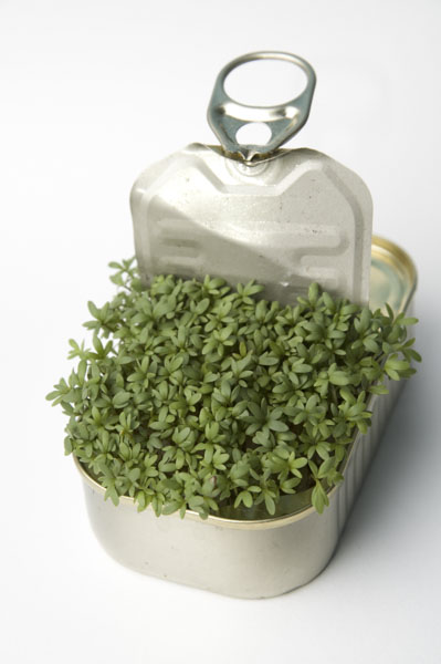 Sardine can with plant