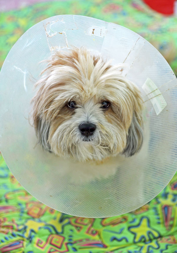 Dog in vet cone