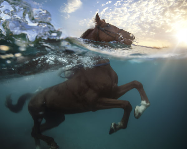 Horse and rider swimming