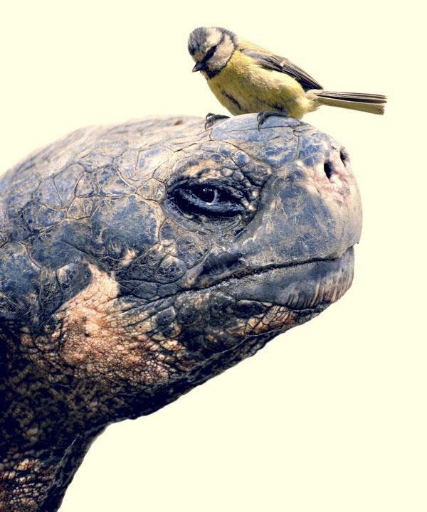 Bird on tortoise