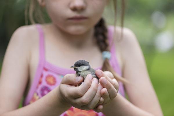 Little girl cradling bird