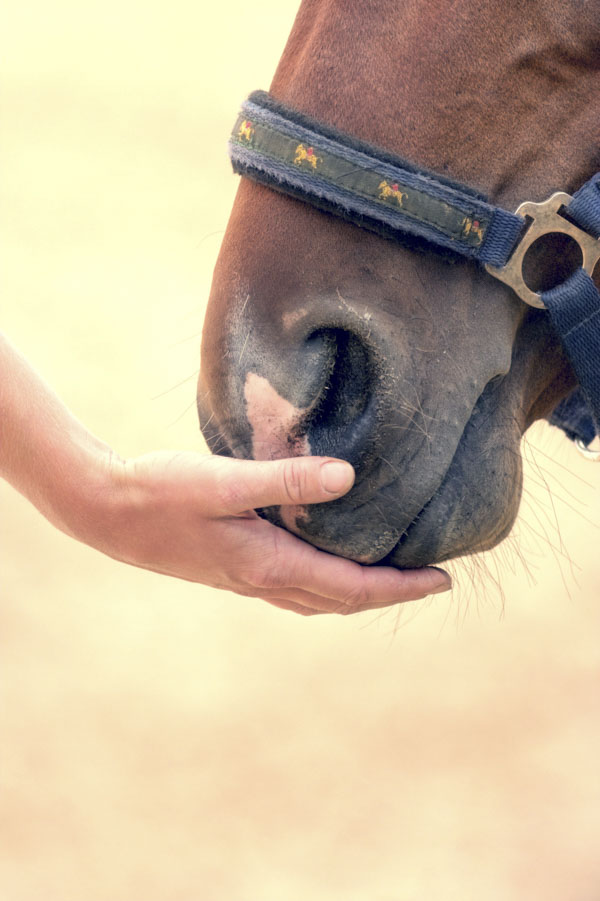 Horse nuzzling palm of hand
