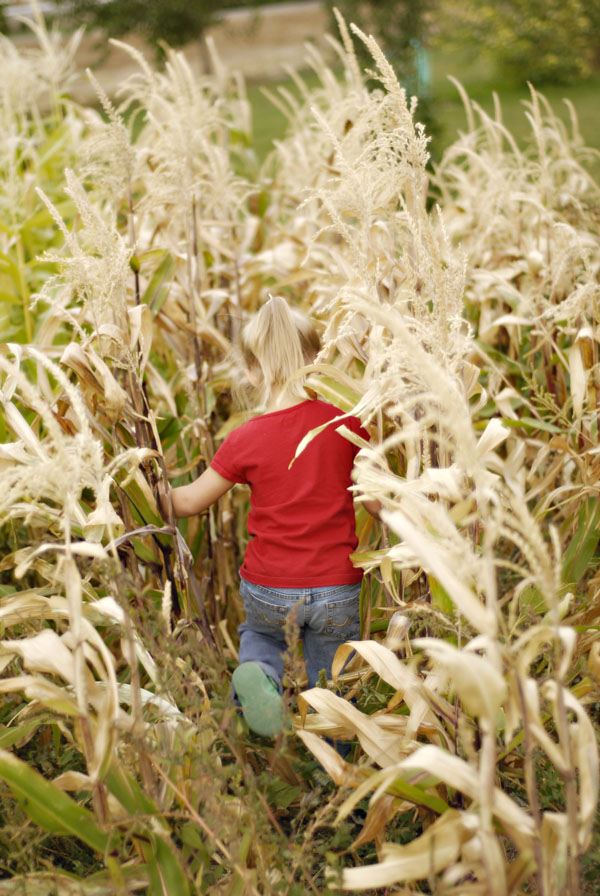 Little girl running in the corn