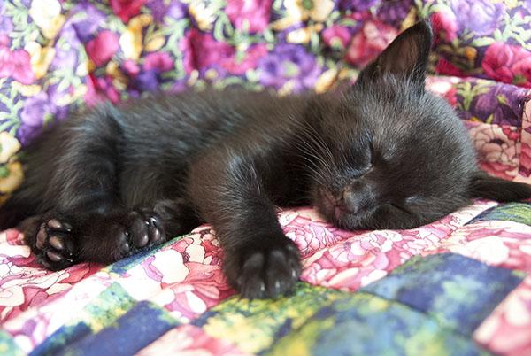 Black kitten sleeping