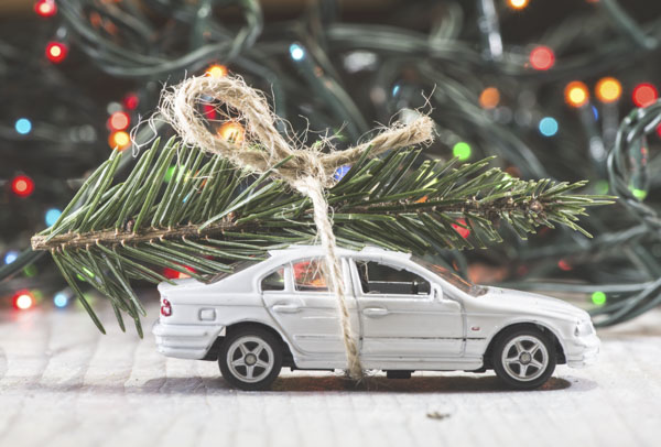 Extra large Christmas tree branch on toy car
