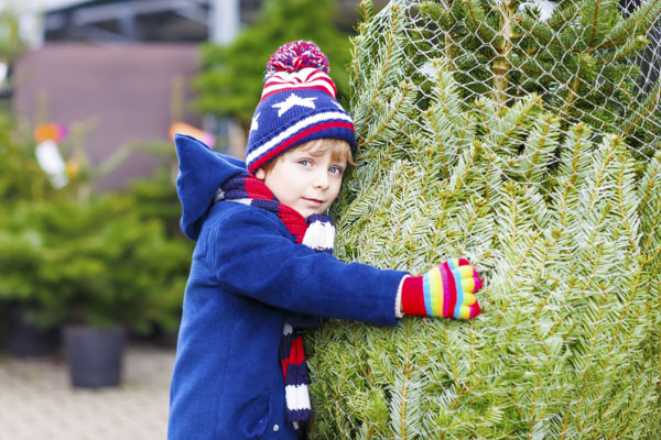 Boy with wrapped Christmas tree