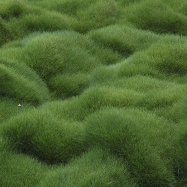 Wild grass growing in every direction
