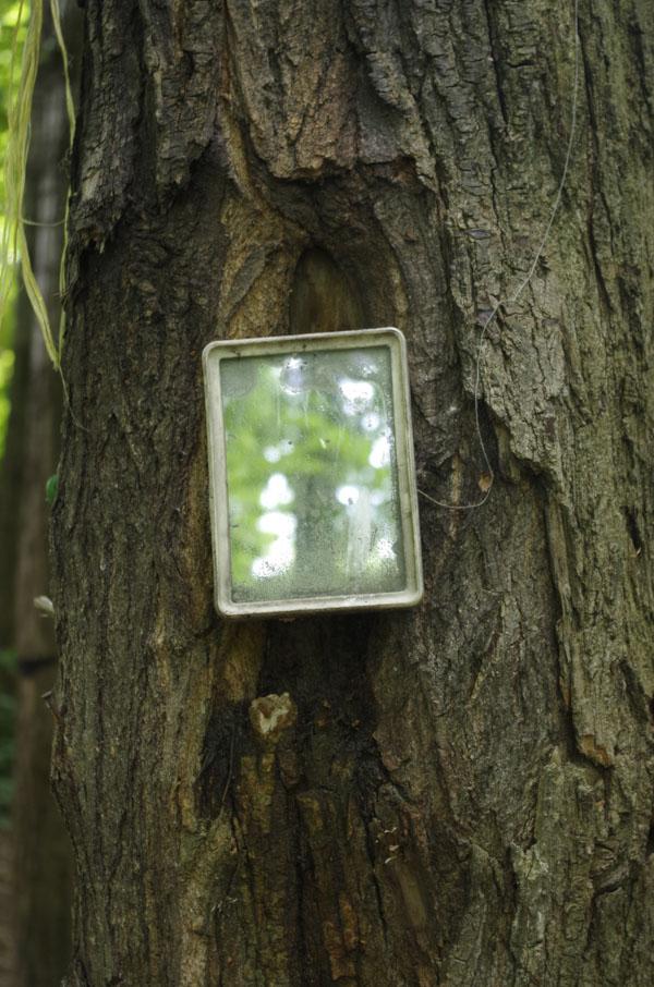 Camping mirror nailed to tree