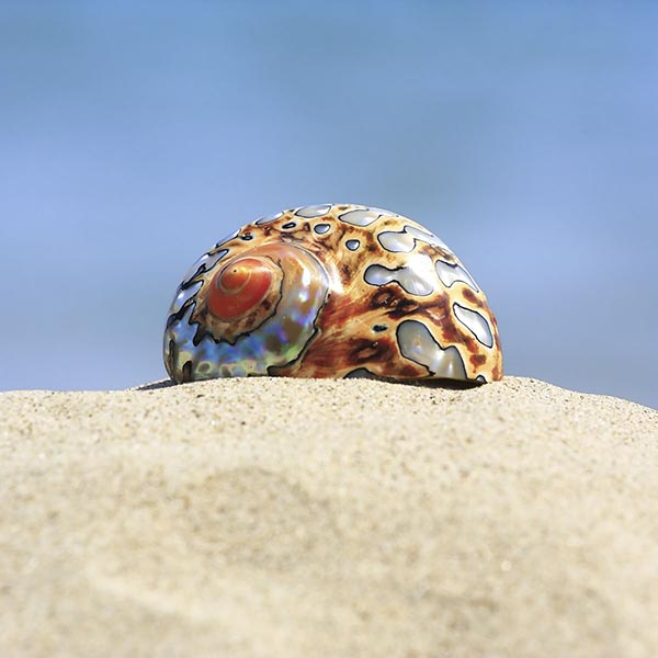 Polished shell on beach