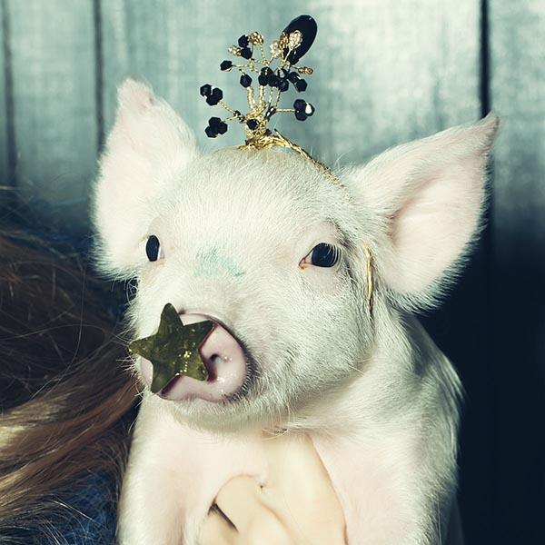 #spiritsays: Bacon bits