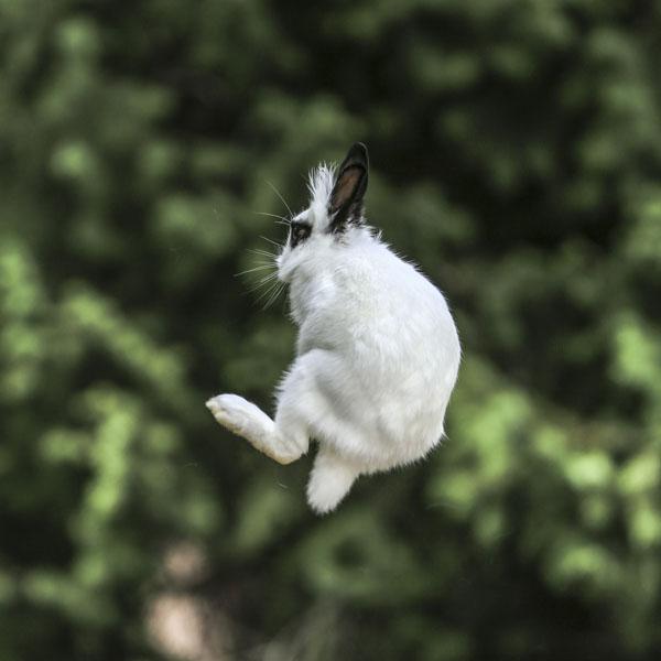 #spiritsays: Ninja bunny