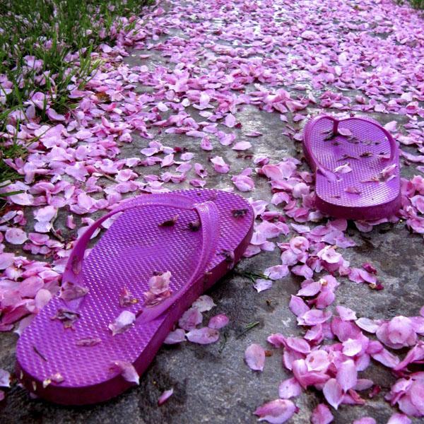 Pair of purple sandals walking in flower petals