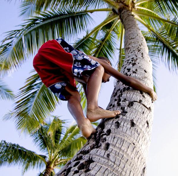 Man climbing palm tree