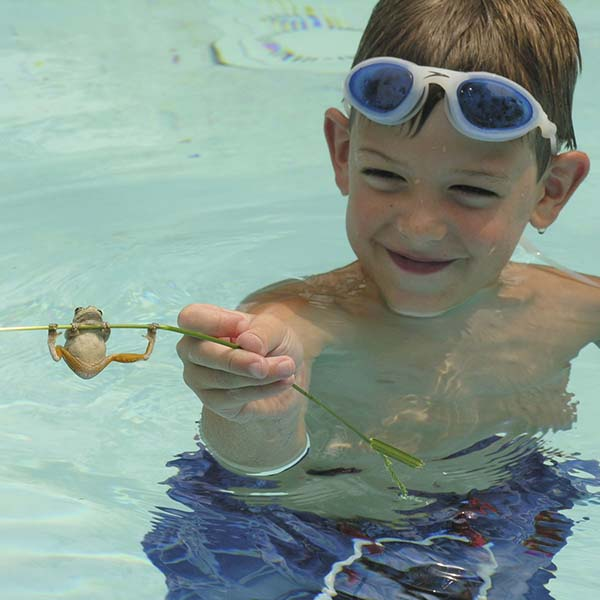 Little boy in swimming pool holding frog on stick