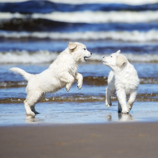 Two puppies playing on beach