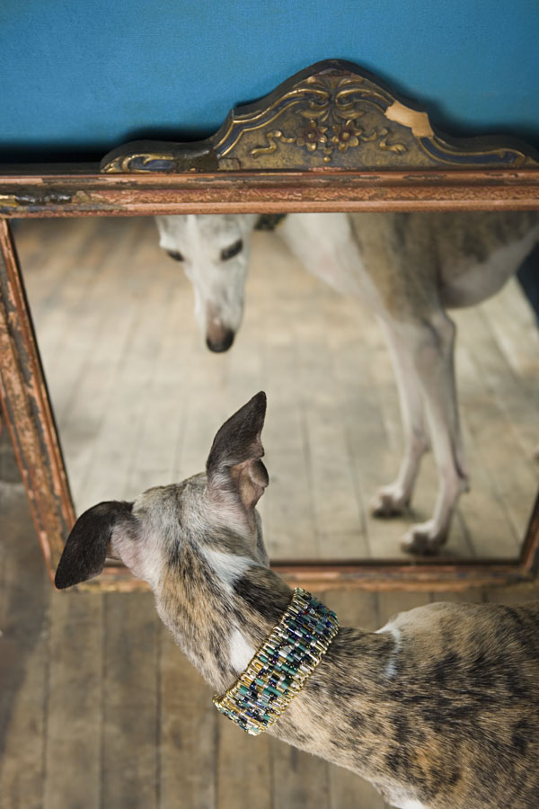 Dog seeing its reflection in the mirror