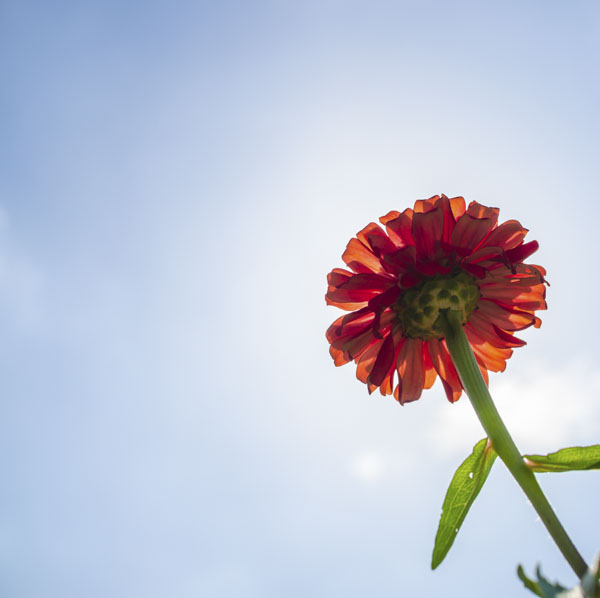 Tall flower growing toward sun