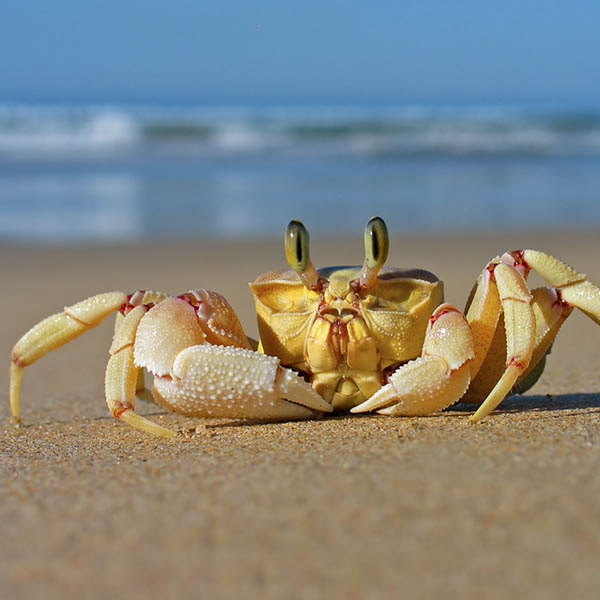 Closeup of crab on the beach