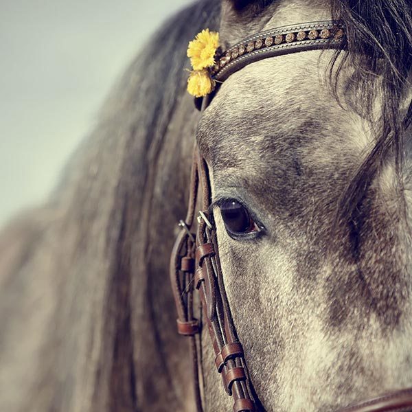Horse with dandelion in bridle