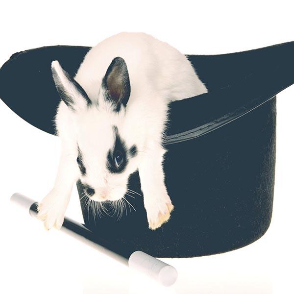 Rabbit, wand and magic black hat