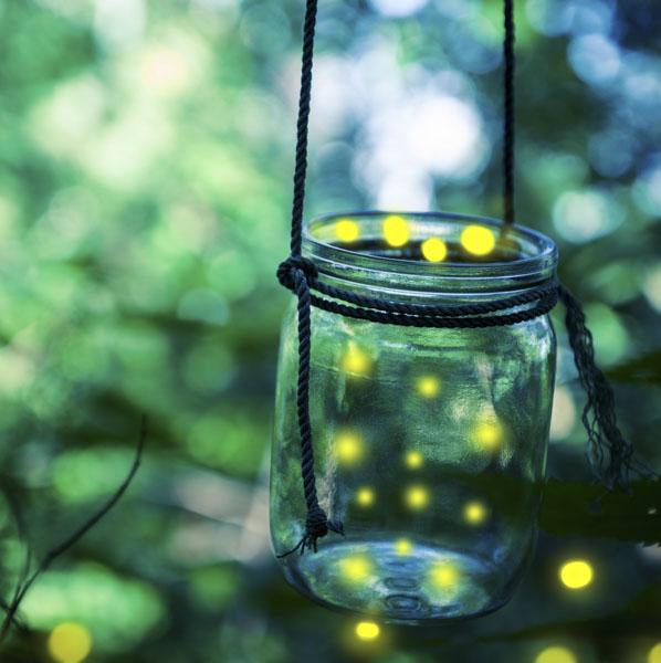 Fireflies circling jar at dusk