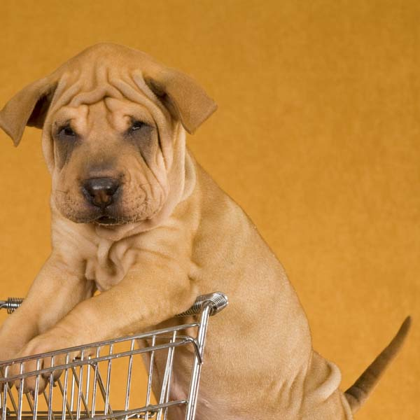Shar Pei puppy and grocery cart
