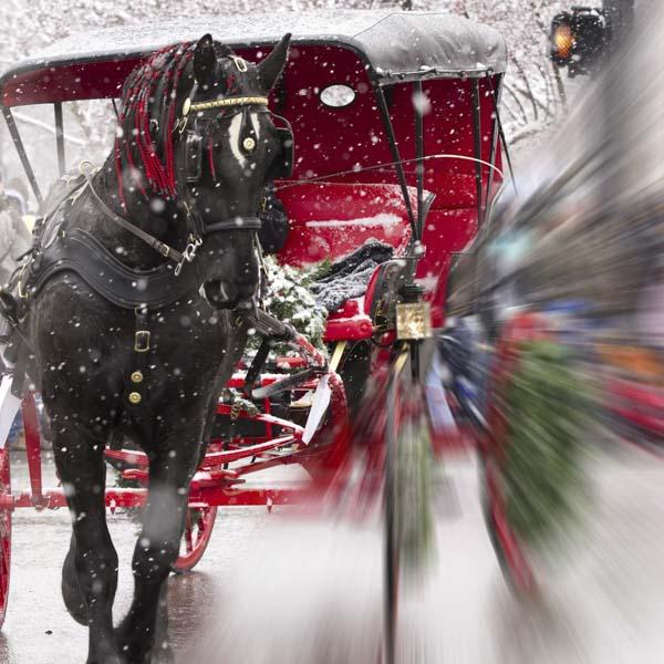 Horse-drawn buggy at Christmas