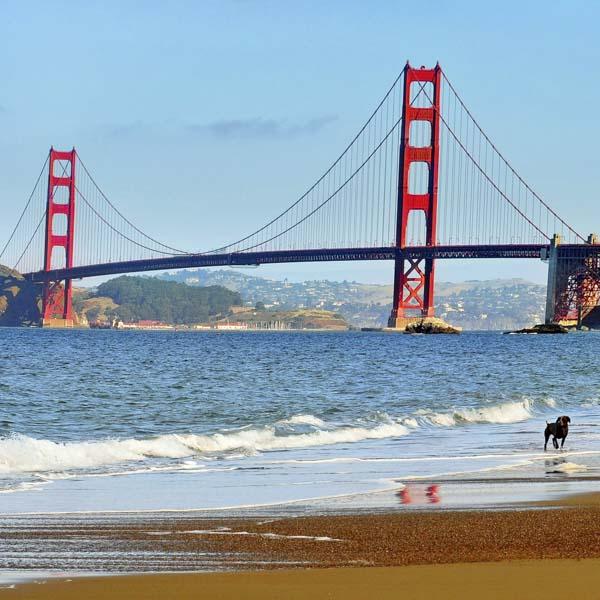 Dog at beach with Golden Gate bridge in background