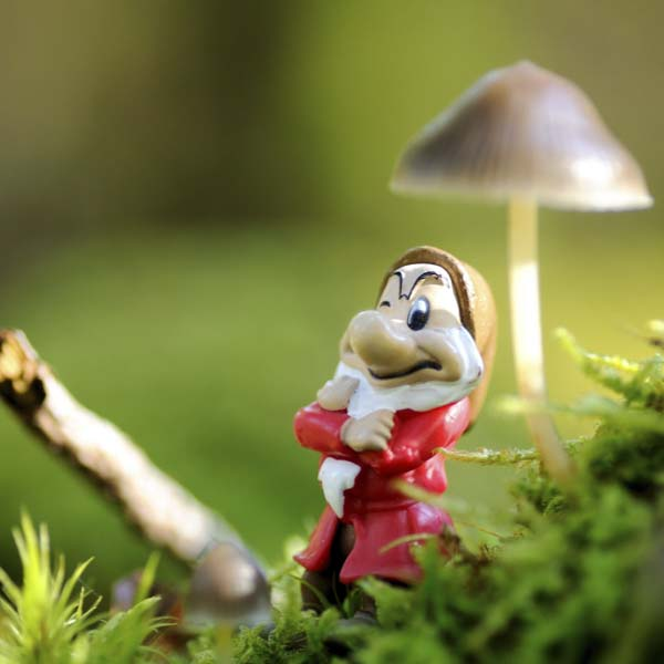 Happy little gnome under mushroom