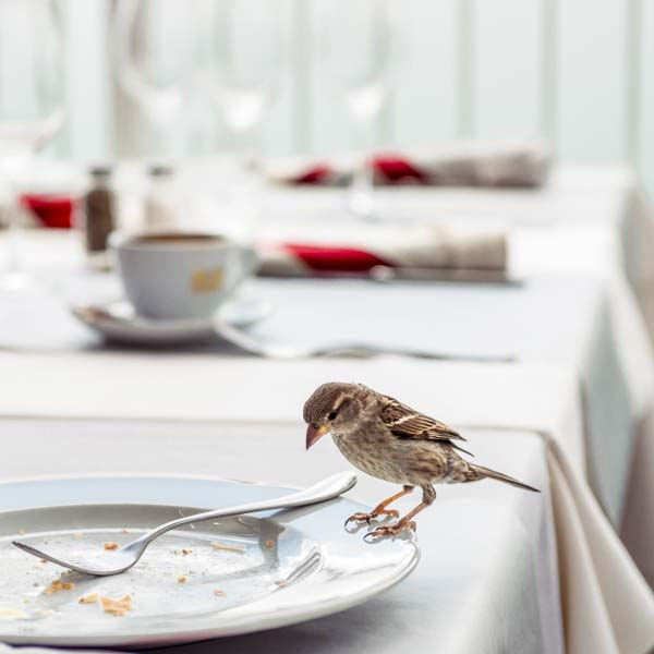 Bird perched on empty plate at restaurant