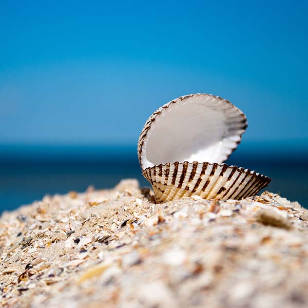 Open shell on the beach