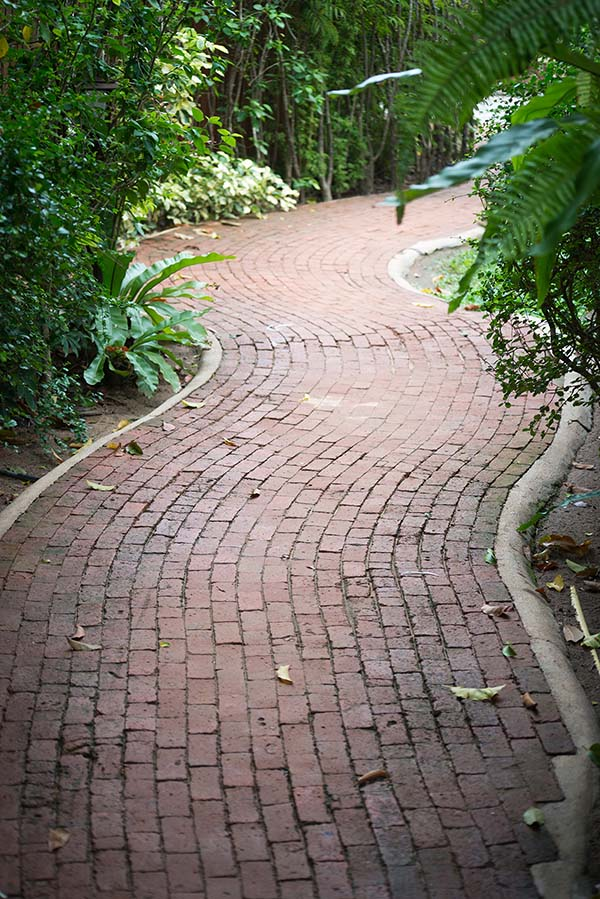Curved pathway in a garden