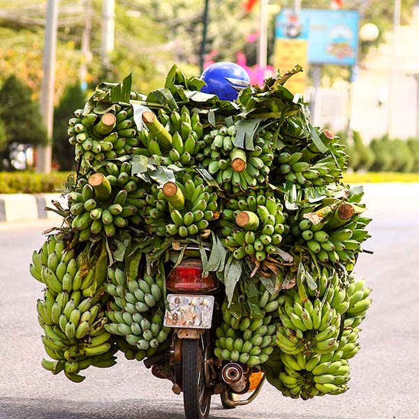 Vendor overloaded with bananas