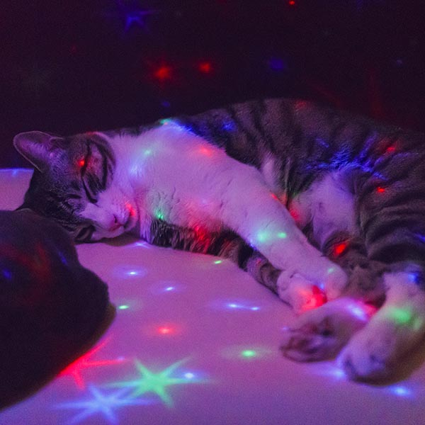 Cat sleeping in a disco floor
