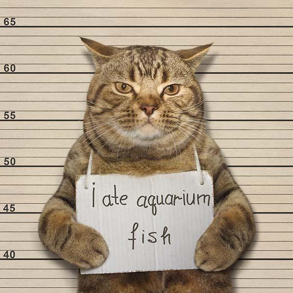 Cat holding a sign saying I ate aquarium fish