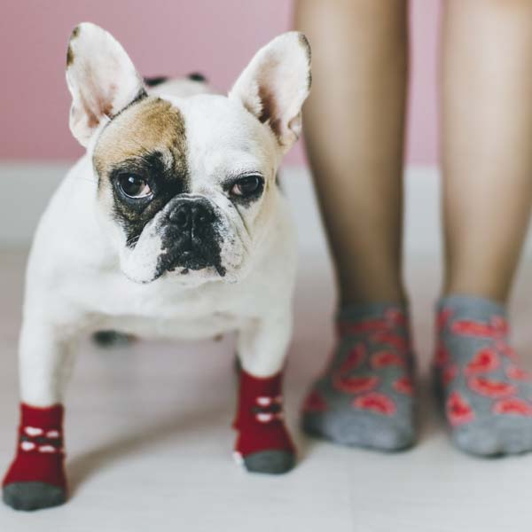 Dog and girl with socks on