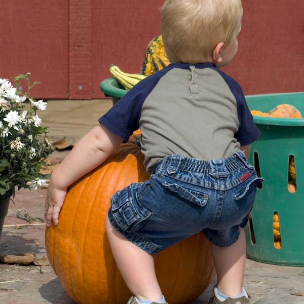 Little boy trying to lift pumpkin