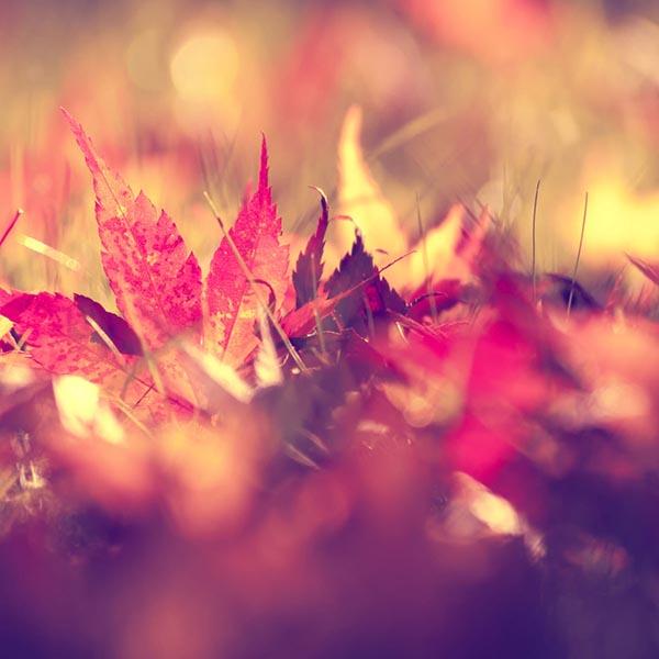 #spiritsays: A leaf
