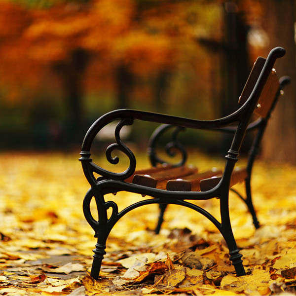 Park bench amid golden leaves in park