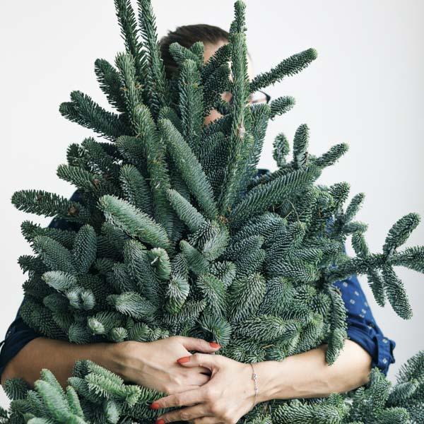 Hugging Christmas tree boughs