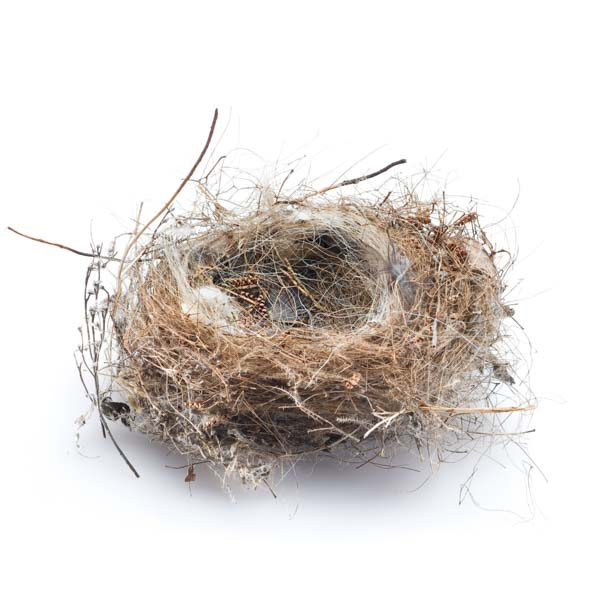 Beautiful bird's nest with feathers