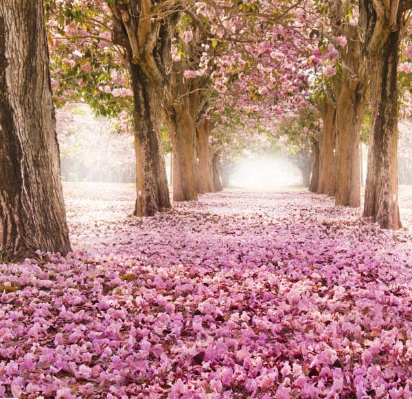 Pathway covered in pink flowers