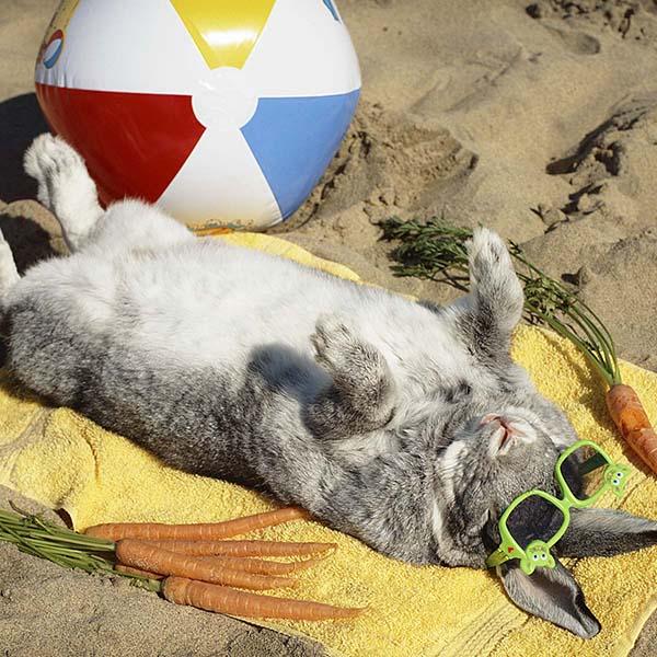 Bunny sunbathing on sand