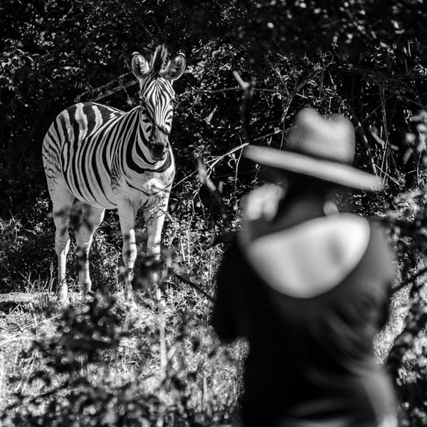 Photographer and zebra