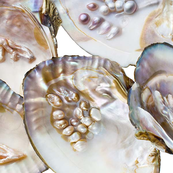 Oysters with natural pearls